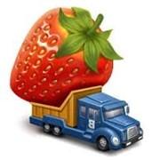 Доставка фруктов и овощей оптом по Киеву фото