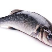 Рыба Сибасс Чилиийски, Тусфиш фото