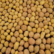 Картофель, выращивание и урожай фото