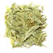 Цвет липы (Tilia Cordata) фото