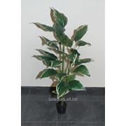 Растение искусственное в горшке, арт. 07х3 фото