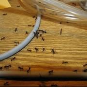 Дезинсекция. Дезинфекция. Дератизация. Очистка от инфекций, насекомых и грызунов. фото