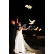 Свадебные туры в Алматы фото