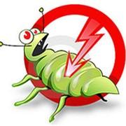 Борьба с насекомыми фото