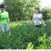 Подборка удобрений для почвы, увеличение урожая, Днепропетровск фото
