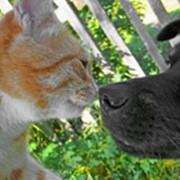 Страхование домашних животных фото