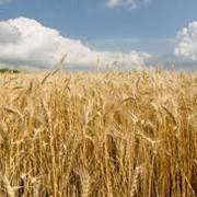 Зерновые продукты, Донецк фото