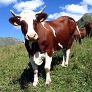 Добавки пищевые для животных фото