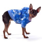 Куртка (голубые круги) фото