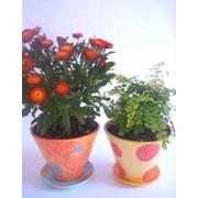 Цветы в керамическом горшочке фото