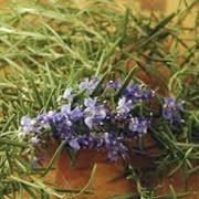 Выращивания пряных, ароматических и лекарственных культур фото