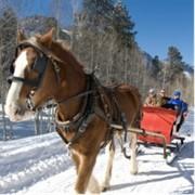 Зимние конные прогулки в Харькове, отдых на лошадях как зимой так и летом в Харькове фото
