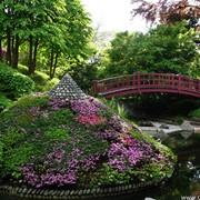 Озеленение сада ЦЕНА ЛЬВОВ УКРАИНА фото