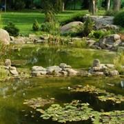 Оформление водоемов растениями фото