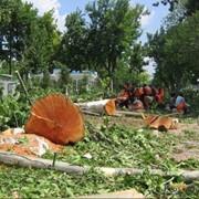 Вырубка лесных насаждений фото