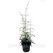 Комнатные растения микс -- Indoor plants mixed фото