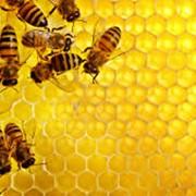 Экспертиза продуктов пчеловодства фото
