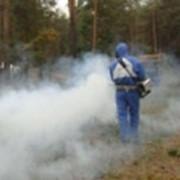 Уничтожение насекомых, грызунов. фото