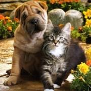 Лечение и ветеринарные услуги фото