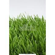 Семенные смеси для газонов фото