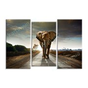 Картина Слон на дороге фото