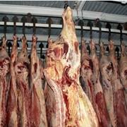 Мясо говяжье полутуши глубокой заморозки фото