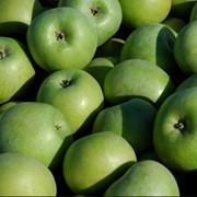 Яблоки Renet Semerenko фото