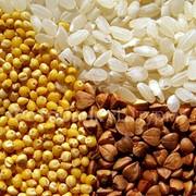Рис круглый, рисовая сечка фото