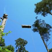 Спил опасных и аварийных деревьев в Казани фото