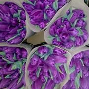 Тюльпаны к 14 февраля и 8 марта фото