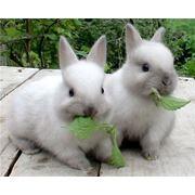 Комбикорм для кроликов фото