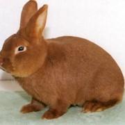 Формирование Сбыта продукции кролиководства фото