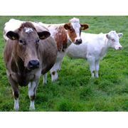 Дрожжи кормовые гидролизные фото