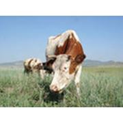 Кальцефос-добавка для жвачных животных фото