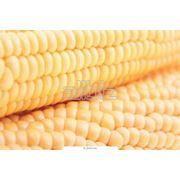 Продукция сельскохозяйственная в Харезме фото