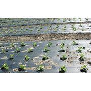 Сельскохозяйственная пленка фото