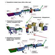 Оборудование (линии) для производства плодоовощной продукции фото