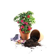 Бесплатная пересадка растений! фото