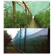 Затенение растений фото