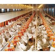 Птичники под ключ от Голландской компании Brodhan Agri Equipment BV brodhan.com фото