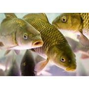 Оборудование для рыбного хозяйства фото