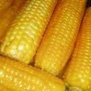 Закупаем кукурузу в житомирской области фото