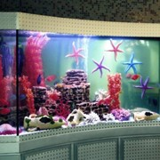 Океанариумы, морские аквариумы строим фото