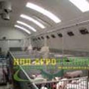 Строительство быстровозводимых свинарников фото