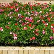 Устройство цветников и клумб №4 фото