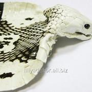Кобра шкура натуральная светло-коричневая с белым фото