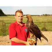Организация охоты хищными птицами фото