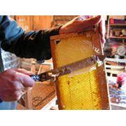 Отбор мёда из ульев фото