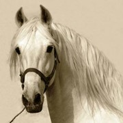 Лошади породы орловский рысак фото