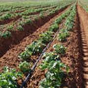 Консультации по агротехнике разведения растений фото